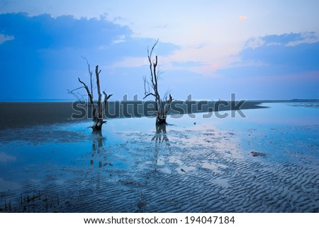Dead Tree Still Standing on the beach at sunset. - stock photo