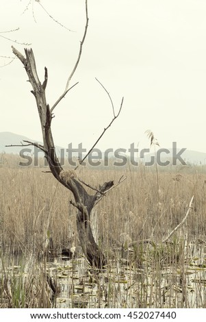 Dead Tree Still Standing on the lake and reeds - stock photo