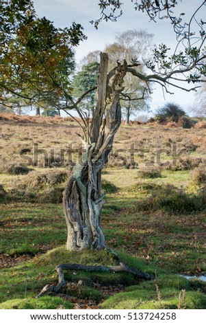 Dead tree trunk against a background of the New Forest, Hampshire, UK