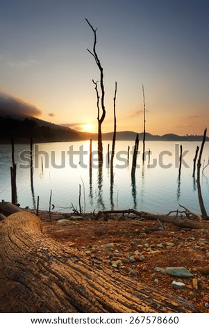 Dead tree trunks and branches submerged in a lake at sunrise, Thailand - stock photo