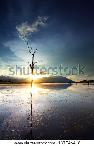 Dead tree trunks and branches submerged in a lake at sunset, Thailand