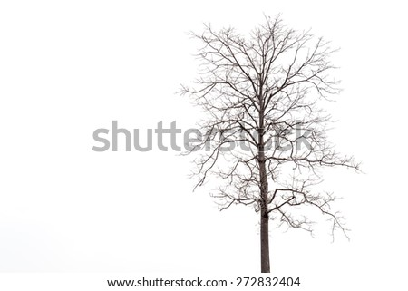 Dead tree without leaf isolated on white background