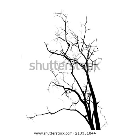 Dead Tree without Leaves - stock photo