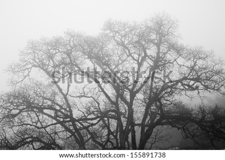 Dead Tree without Leaves in mist-black and white photo - stock photo