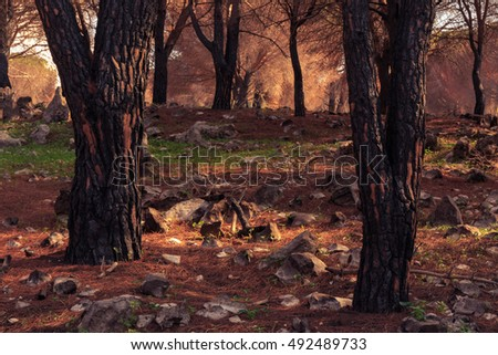 Dead trees after forest fire on the Monte Pellegrino in September Autumn in Sicily, Italy in Europe