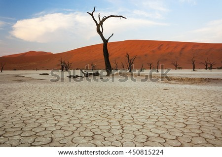 Dead trees and red dunes in Sossusvlei, Namibia