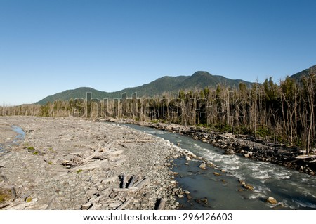 Dead Trees from Eruption of Chaiten Volcano - Chile