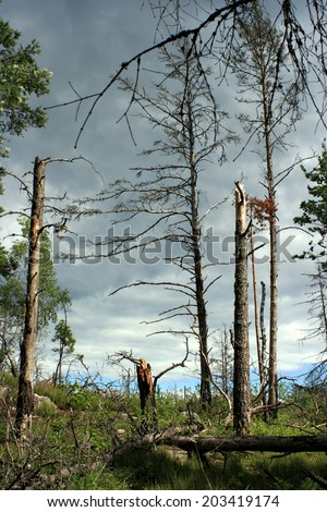 Dead trees in a forest - stock photo