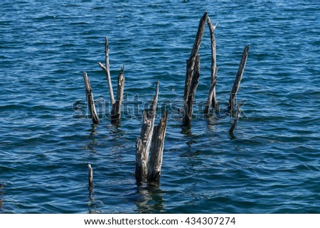 Dead trees in blue water. Branches in wavy water