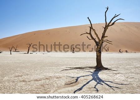 Dead trees in Deadvlei, Sossusvlei, Namibia, Africa. - stock photo