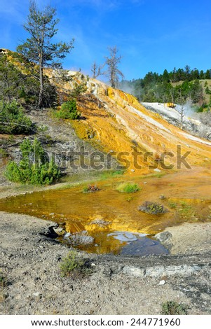 Dead Trees in Mound Terrace, Mammoth Hot Springs area of Yellowstone National Park, Wyoming - stock photo
