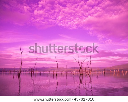 Dead trees in the lake of Srinakarin Dam Kanchanaburi thailand sweet tone color. - stock photo