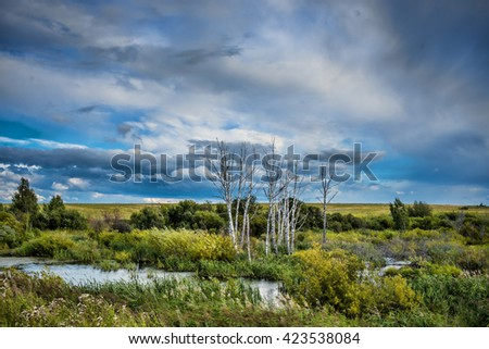 dead trees in the swamp against a beautiful sky - stock photo