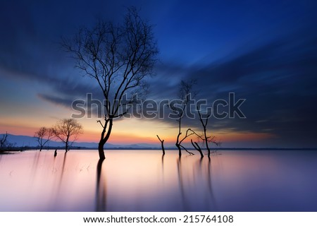 Dead trees in the water with animated clouds on the reservoir at sunrise - stock photo
