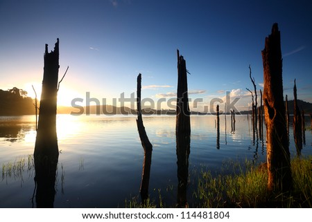 Dead trees on a water dam in the sunrise - stock photo
