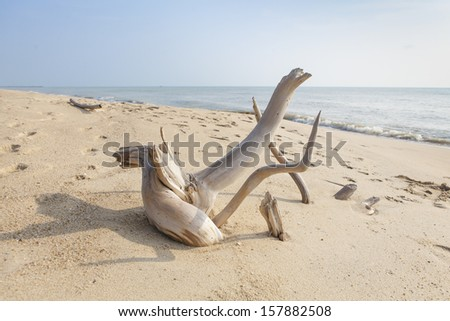 Dead trees on the beach. - stock photo