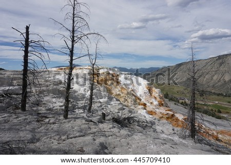Dead trees on the travertine terraces at Mammoth Hot Springs, Yellowstone - stock photo