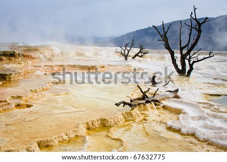 Dead trees stand in the travertine terrace of Mammoth Hot Springs, Yellowstone National Park. - stock photo