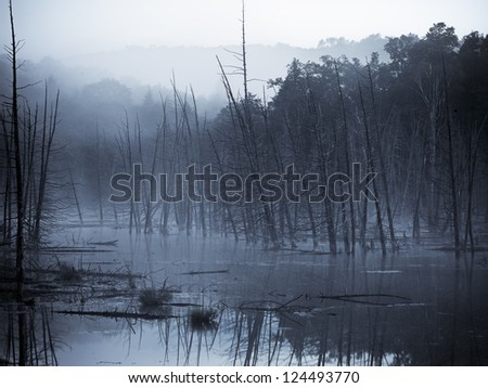 Dead Trees Fog Dead Trees Stand Still in a