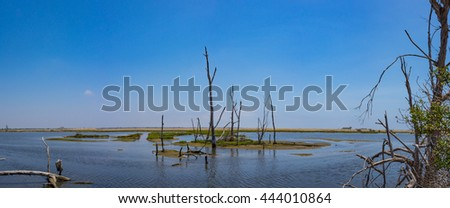 Dead trees stands in the swampy marsh of a tidal pool and California wetlands.