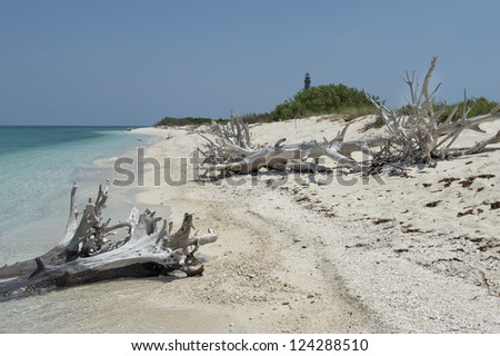 Dead tress at the shore of Dry Tortugas beach