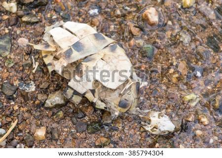 Dead turtle on the beach - stock photo