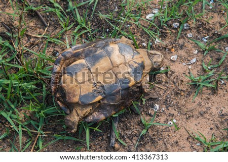 Dead turtles after using firebreak for stopping wildfire