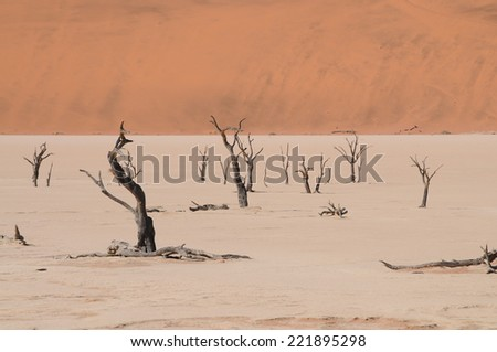 Dead Vlei in Namib desert,Namibia, - stock photo