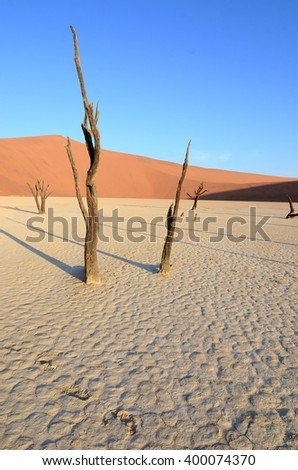 Dead Vlei in Namib desert, Namibia, Africa - stock photo
