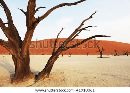 Dead vlei in Namibia - stock photo