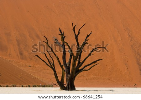 Dead Vlei is a white clay pan located near the more famous salt pan of Sossusvlei, inside the Namib-Naukluft Park in Namibia, Africa