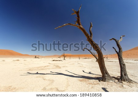 Dead Vlei - Sossusvlei in the Namib Desert, Namibia, Africa - stock photo