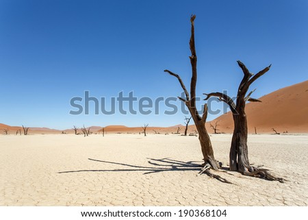 Dead Vlei - Sossusvlei in the Namib Desert, Namibia, Africa - stock photo