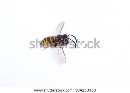 Dead wasp on a white background - stock photo