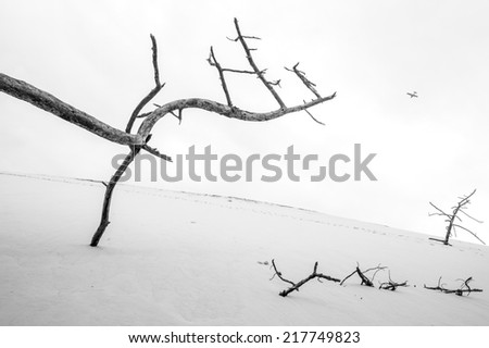 Dead wood on the Pilat Dune and plane in the sky, Archachon, France
