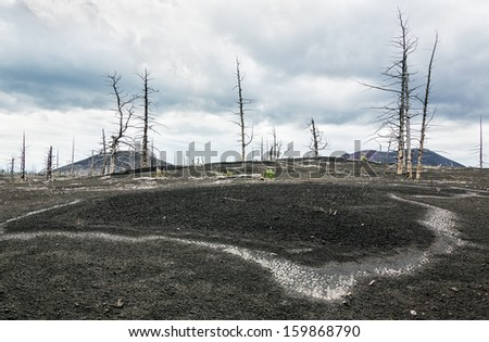 Dead wood strewn with volcanic ash during an eruption in 1975, a breakthrough in the northern slope of the volcano Tolbachic - Kamchatka, Russia - stock photo