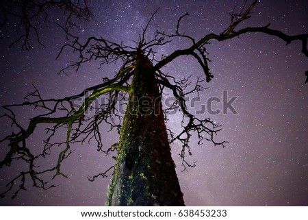 Dead wood with stars and the night sky on the background. The Milky Way is just behind the tree.