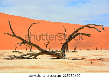 """Deadvlei is a white clay pan located near the more famous salt pan of Sossusvlei, inside the Namib-Naukluft Park in Namibia. Also written DeadVlei or Dead Vlei, its name means """"dead marsh"""" - stock photo"""