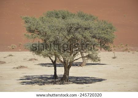 Deadvlei, Namib-Naukluft National Park, Namibia, Africa - stock photo