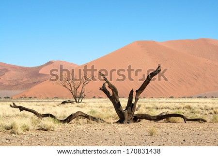 Death tree in Namibia - stock photo
