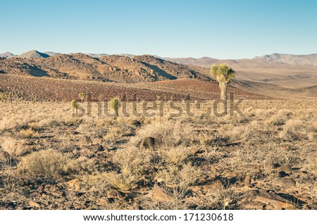 Death Valley - Cactus in the Desert - stock photo