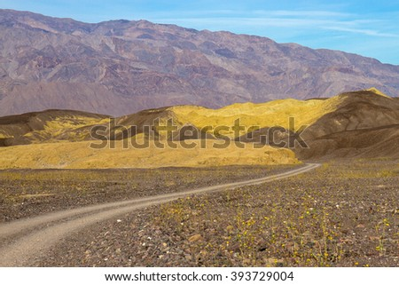 Death Valley National Park road to Mustard Canyon and wildflowers - stock photo