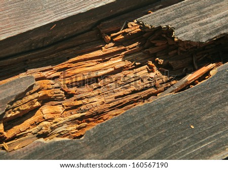 decayed rotten hole in an old board - stock photo
