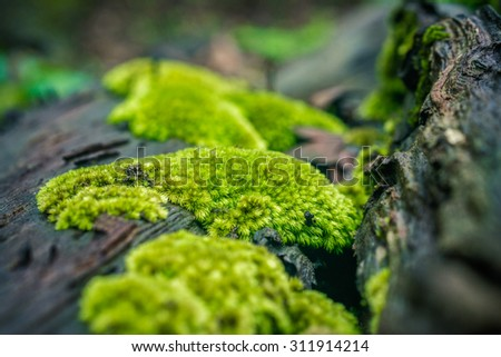 Decaying timber filled by moss - stock photo