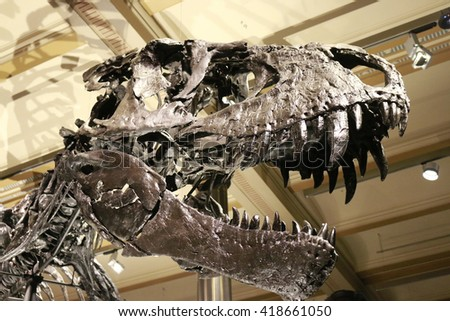 """DECEMBER 2015 - BERLIN: the skeleton of the Tyrannus Saurus Rex """"Tristan Otto"""" on display at the Museum of Natural History, Berlin. - stock photo"""