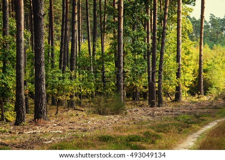 Deciduous forest in early autumn