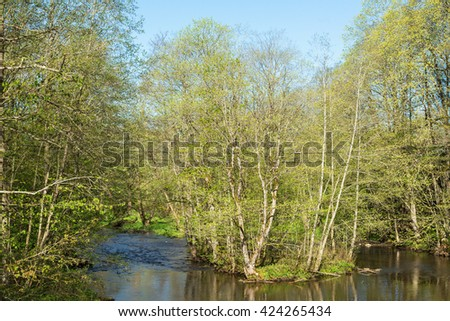 Deciduous forest in the spring by a river