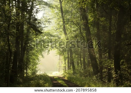 Deciduous forest on a foggy summer morning. - stock photo