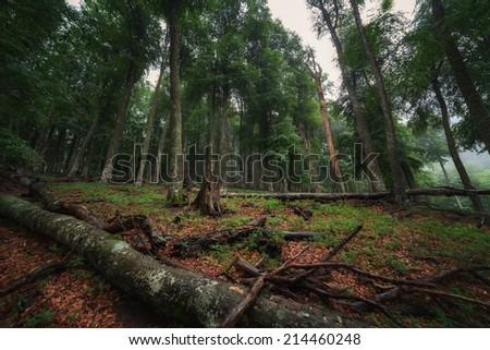 Deciduous forest with fallen trees after rain - stock photo