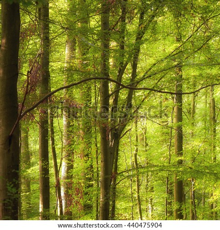 Deciduous forest with green foliage. - stock photo